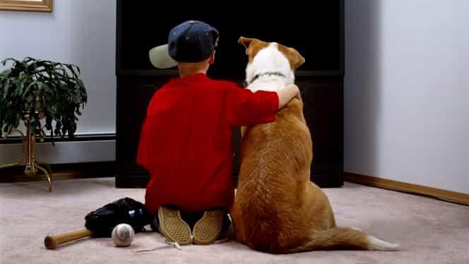 Animalele de companie, permise în apartament doar cu acordul vecinilor. Motivarea judecătorilor