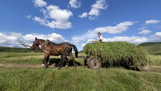 Calul românesc, delicatesă pentru italieni! Cum au ajuns samsarii să facă averi de pe urma vânzării animalelor