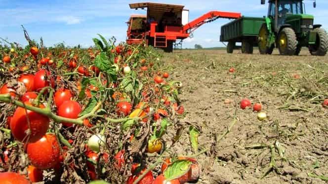 Un român a murit în Italia, pe câmp, la cules de roșii! Soția nu are bani să-i repatrieze trupul neînsuflețit