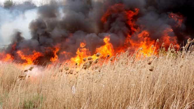 Incendiu de vegetaţie pe A1. Traficul rutier s-a desfăşurat cu dificultate