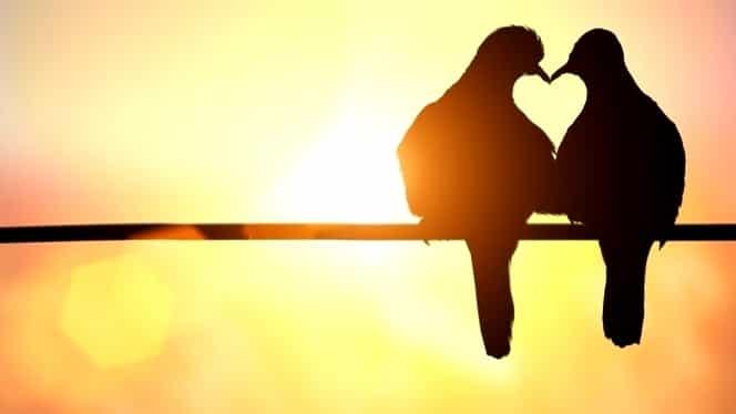 Declarații de dragoste, SMS-uri, felicitări, mesaje romantice, de Dragobete!