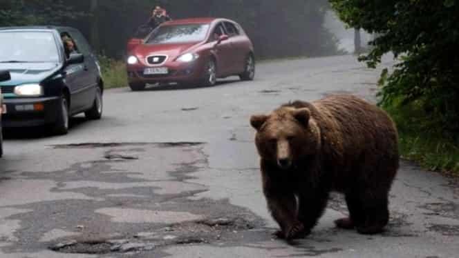Accident cu doi răniți după ce șoferul a încercat să evite un urs. Incidentul rutier s-a petrecut în Harghita