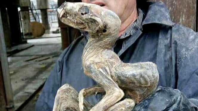 FOTO. Mumia unui monstru misterios, descoperită în Siberia