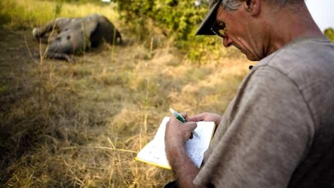 Măcel în masă în parcul naţional din Zimbabwe, în care trăia şi leul Cecil. 62 de elefanţi au fost otrăviţi şi decapitaţi