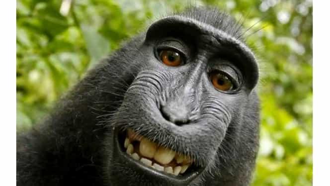 """Ce a făcut o maimuţă cu telefonul pe care l-a furat. Povestea amintește de celebrul """"caz Naruto"""", ajuns în tribunale. FOTO VIDEO"""