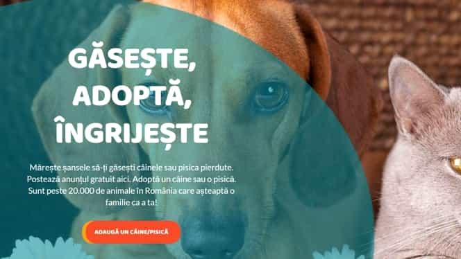 Am lansat animalepierdute.ro, unica platforma de renunire a cainilor si pisicilor cu stapanii lor