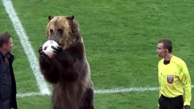 Video. Ruşii au adus un urs pe stadion! Arbitrul a rămas înmărmurit