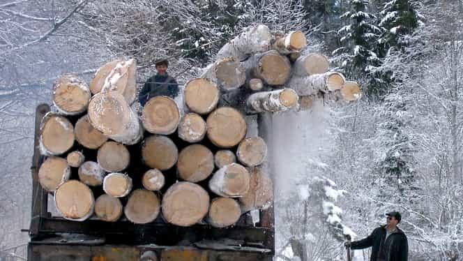 Cum se fură pădurile României cu ajutorul legilor! O cerneală care se șterge cu bricheta, tertipul excelent! VIDEO